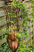 Springtime garden - blooming climber on a metal trellis