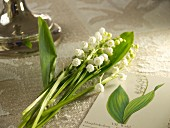 Lilies of the valley on a tablecloth between silver candlesticks and a drawing