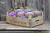 Vintage wooden crate of artichokes, hydrangeas and marjoram flowers