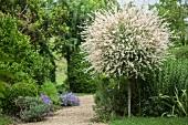 Gartenweg zwischen Bäumen und Büschen