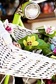 Orchids in a bicycle basket