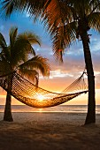 Hammock hanging between palm trees on beach