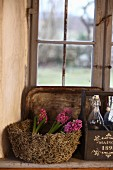 Pink hyacinths in moss basket next to vintage bottles on window sill