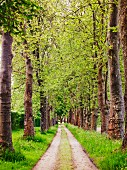 Avenue of trees (Dordogne, France)