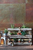 Plant shelves made from wooden pallet and metal chair against corten steel wall