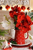Amaryllis in red jug with polka dots