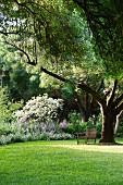 Wooden bench below overhanging ash tree in large garden