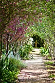 Arched walkway of Japanese crab apple trees (Malus Floribund) with stone sculpture at far end