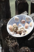 Key, string and corks in handcrafted bowl with mosaic of seashells