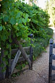 Open garden gate next to tall, climber-covered fence along path