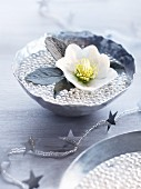 Hellebore in bowl of beads and water as winter table decoration