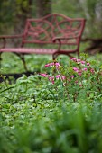 A Bench in a Garden; Bleeding Hearts