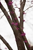 Pink Flowers Growing From a Tree
