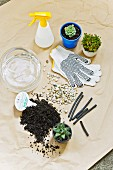 Work gloves, spray bottle, various small succulents, gravel, compost and glass vase