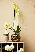 Orchideen auf Holzregal