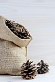 Hessian sack of pine cones