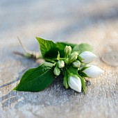 White jasmine flowers on wooden table