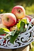 Rote Äpfel in einer Metallschale auf Gartenstuhl