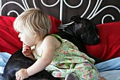 Dog and toddler lying on bed together
