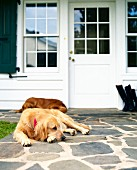 Two golden retreiver dogs rest by front door of homes