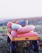 Pumpkins and gourds in wagon