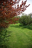 View into garden with trees, shrubs & lawn