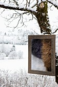 Picture frame containing pieces of fur on snowy tree trunk