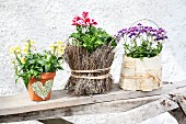 Arrangement of flowering plants in small planters decorated in various ways on wooden board