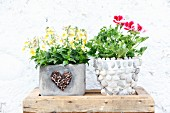 Horned violets and scented pelargoniums in planters decorated in various ways
