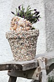 Flowering butterfly lavender in pot decorated with seashells