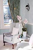 Orchidee auf Beistelltisch und eleganter Ohrensessel; Fenster zum Garten mit floral gemustertem Vorhang im Hintergrund
