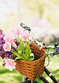 Tulips & lilac in bicycle basket