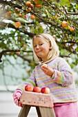 Mädchen steht auf Leiter und isst frisch gepflückten Apfel