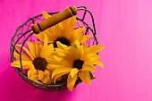 Sunflowers in wire basket