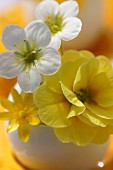 Yellow & white spring flowers in egg shell used as miniature vase