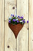 Metal heart planted with horned violets decorating wall