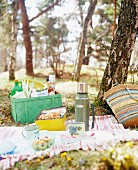 Picnic in a forest.