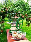 Apfelpresse und frische Äpfel im Garten