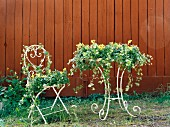 Mit Blumen und Kletterpflanzen dekorierter Gartenmöbel vor brauner Holzwand
