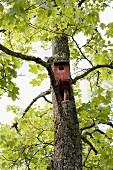 Starenhäuschen am Ahornbaum
