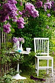 Chair and table on domestic garden