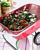 Flowers in a wheelbarrow