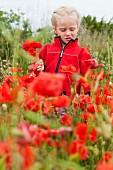 Little girl wearing red jumper in poppy field