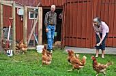 Senior couple feeding hens