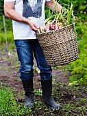 Man carrying wicker basket of freshly harvested onions
