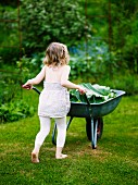 Little girl pushing wheelbarrow of rhubarb leaves