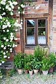 Potted plants on floor and rose bush against rustic brick facade with lattice window