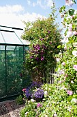 Flowering bushes along fence and in front of greenhouse