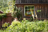 Sunny bushes in front of old wooden house