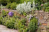 Half-height stone wall in flowering garden